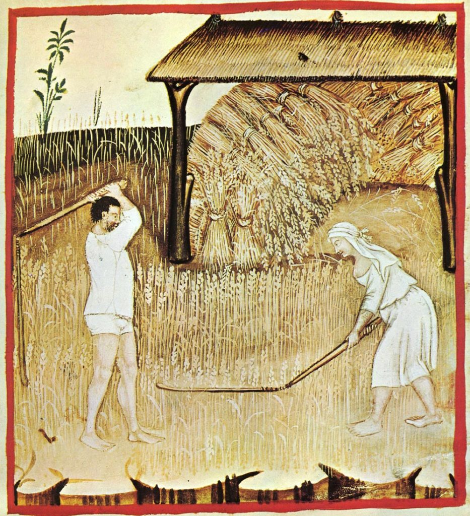Segadores medievales de trigo; el pan